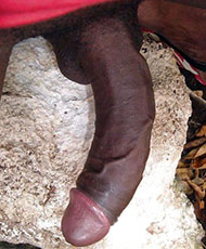 12 inch cock