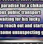 chikan breast groping video