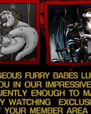 gay furry porn